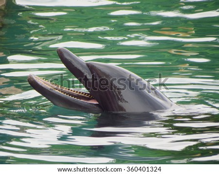 Dolphin in the water of the carribean sea - stock photo