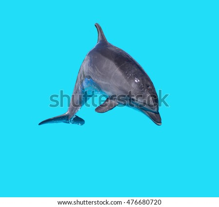 Dolphin isolated on a blue background