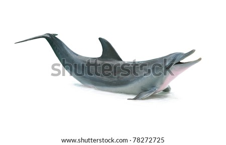 Dolphin isolated on white background - stock photo