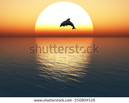 dolphin jump on sunset background