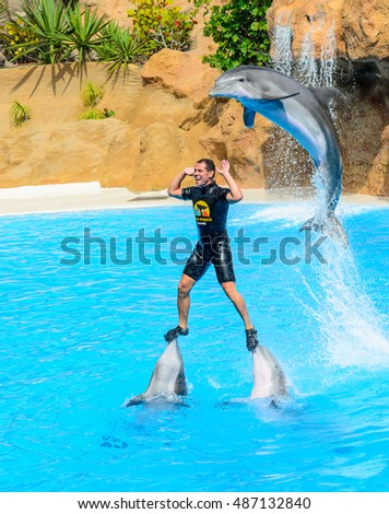 Swimming with dolphins stock images royalty free images for Pool man show