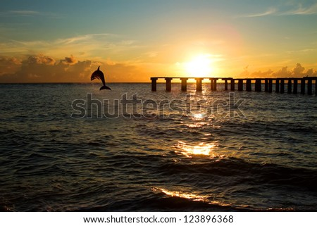 dolphin jumping out of the sea in florida - stock photo