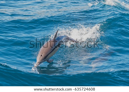 Dolphin jumping outside the sea