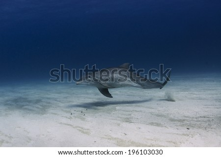 Dolphin on the Bottom - stock photo