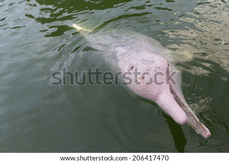 Dolphin play with audience during a show in Pattaya, Thailand - stock photo
