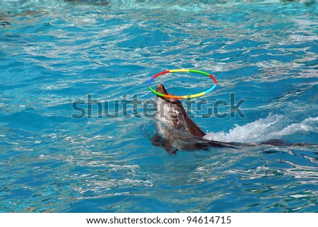 Dolphin playing hoop - stock photo
