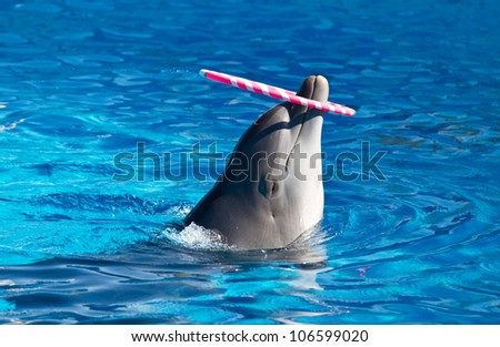 dolphin playing in the swimming pool - stock photo