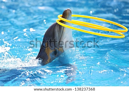 dolphin playing with a hula-hoops - stock photo