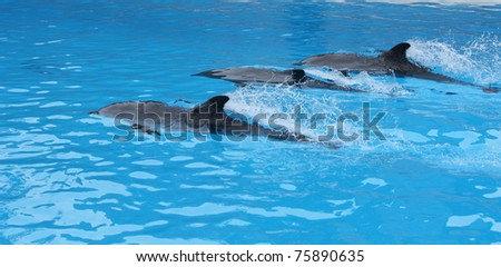 Dolphin show in Loro Parque in Tenerife, Canary Islands.