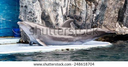 Dolphin show on stage - stock photo