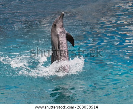 dolphin show standing in water