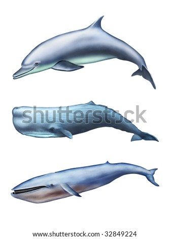 Dolphin, sperm whale and blue whale. Digital illustration. - stock photo
