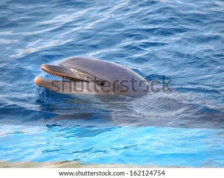 dolphin swiming in the  pool          - stock photo