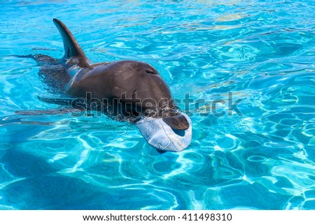 Dolphin swimming with a blue ball