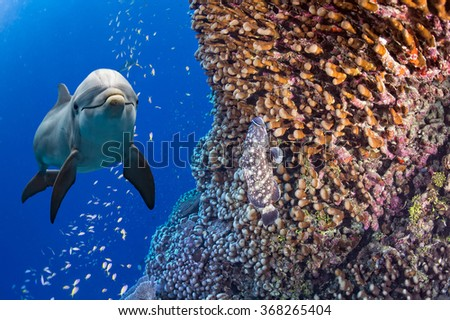 dolphin underwater on deep blue sea background looking at you - stock photo