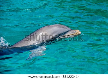 Dolphin -Views around the Caribbean island of Curacao