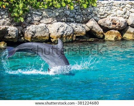 Dolphin -Views around the Caribbean island of Curacao - stock photo