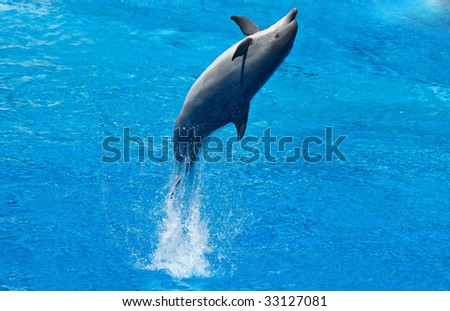 dolphing jumps from the water