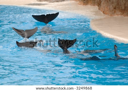 Dolphins are wawing goodbye with their fins. - stock photo