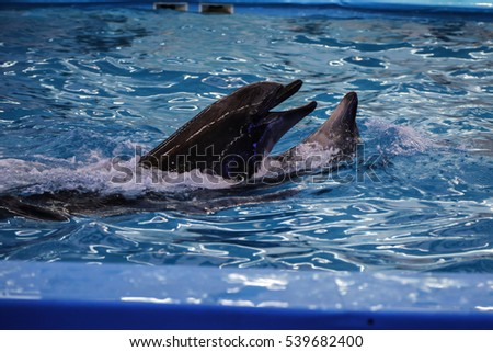 dolphins dancing couple in the pool