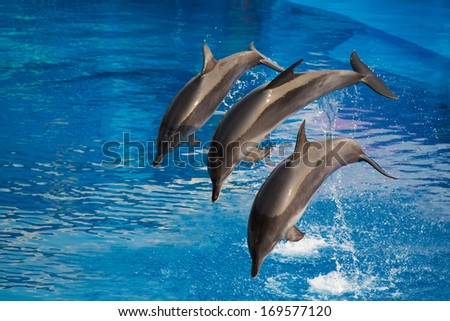 Dolphins dive into water, doing performance in park - stock photo