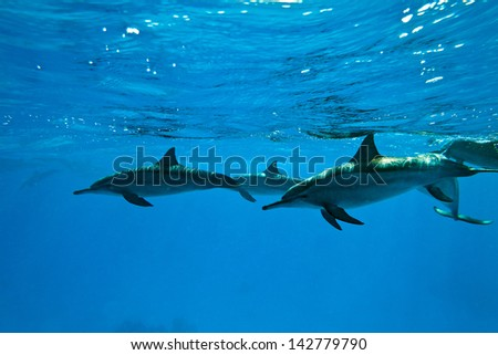 Dolphins in the sea - stock photo