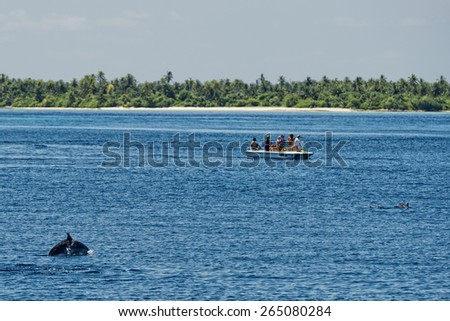 dolphins jumping outside the sea  - stock photo