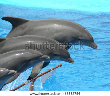 dolphins jumping somewhere in Spain - stock photo