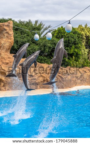 Dolphins jumping to reach balls during a park show. - stock photo