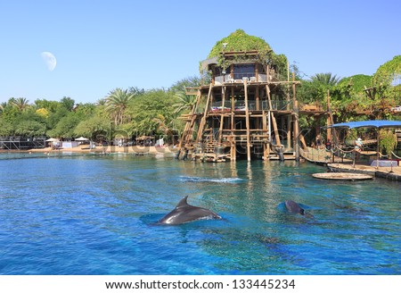 Dolphins near the beautiful beach of Red sea - stock photo
