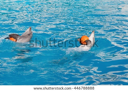 Dolphins playing with a orange balls in the blue water - stock photo
