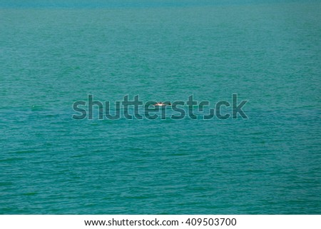 Dolphins, sea southern Asia foraging flocks of little say. - stock photo