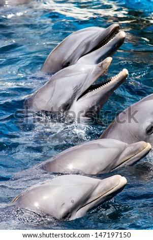 Dolphins swim in the pool - stock photo