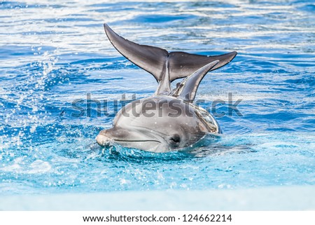 Dolphins swim in the pool ( HDR image ) - stock photo