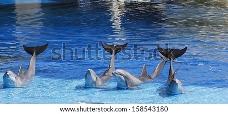 dolphins waving its tail raised - stock photo