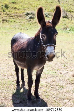 Domestic animal of donkey farm