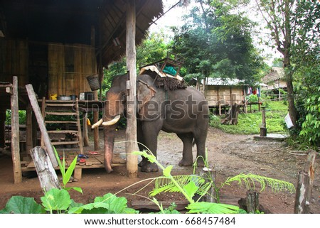 domestic Asiatic elephant, Elephas maximus, parked next to home