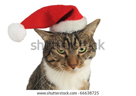 Domestic Cat bored with christmas hat