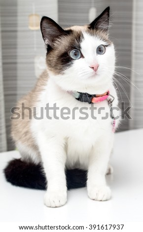 domestic cat closeup