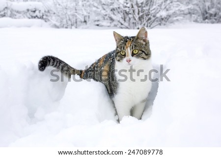 Domestic cat having fun in the fresh snow.