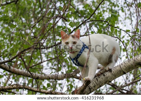 domestic cat in the park, Cat on a tree, cat walk in nature - stock photo