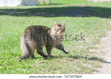 Domestic cat in the park in Cesis, Latvia