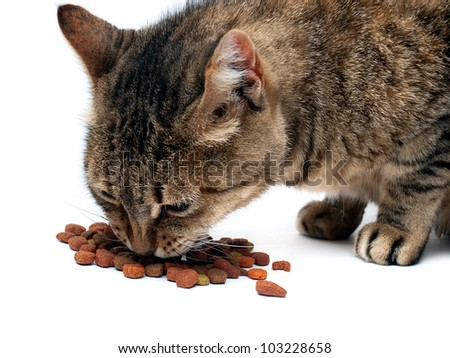 Domestic cat is eating pet food on a white background. - stock photo