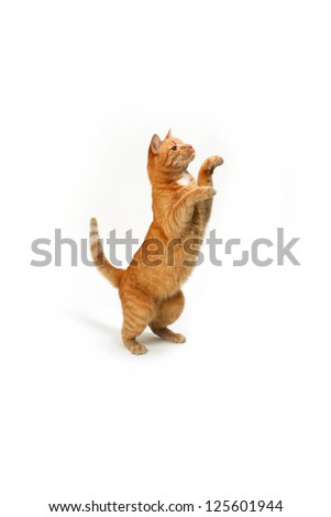 domestic cat isolated on a white background - stock photo