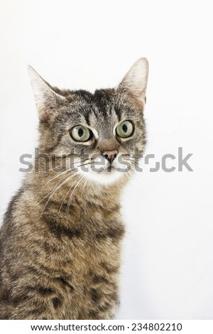Domestic cat, kitten, portrait - stock photo