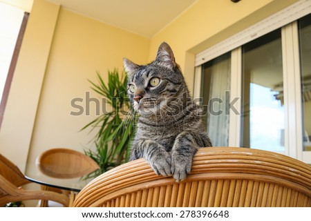 domestic cat looking out from the balcony - stock photo