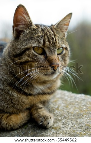 Domestic cat, lying down on the wall - stock photo