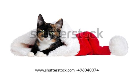 Domestic  cat lying in a santa hat on a white background