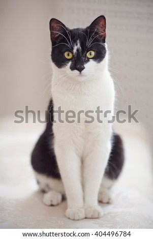 Domestic cat of a black-and-white color sits - stock photo