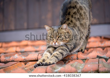 Domestic cat on a roof.
